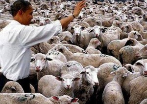 Obamasheep